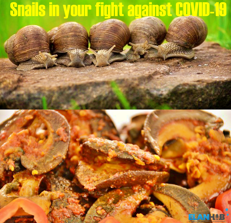Snails In Your Fight Against COVID-19